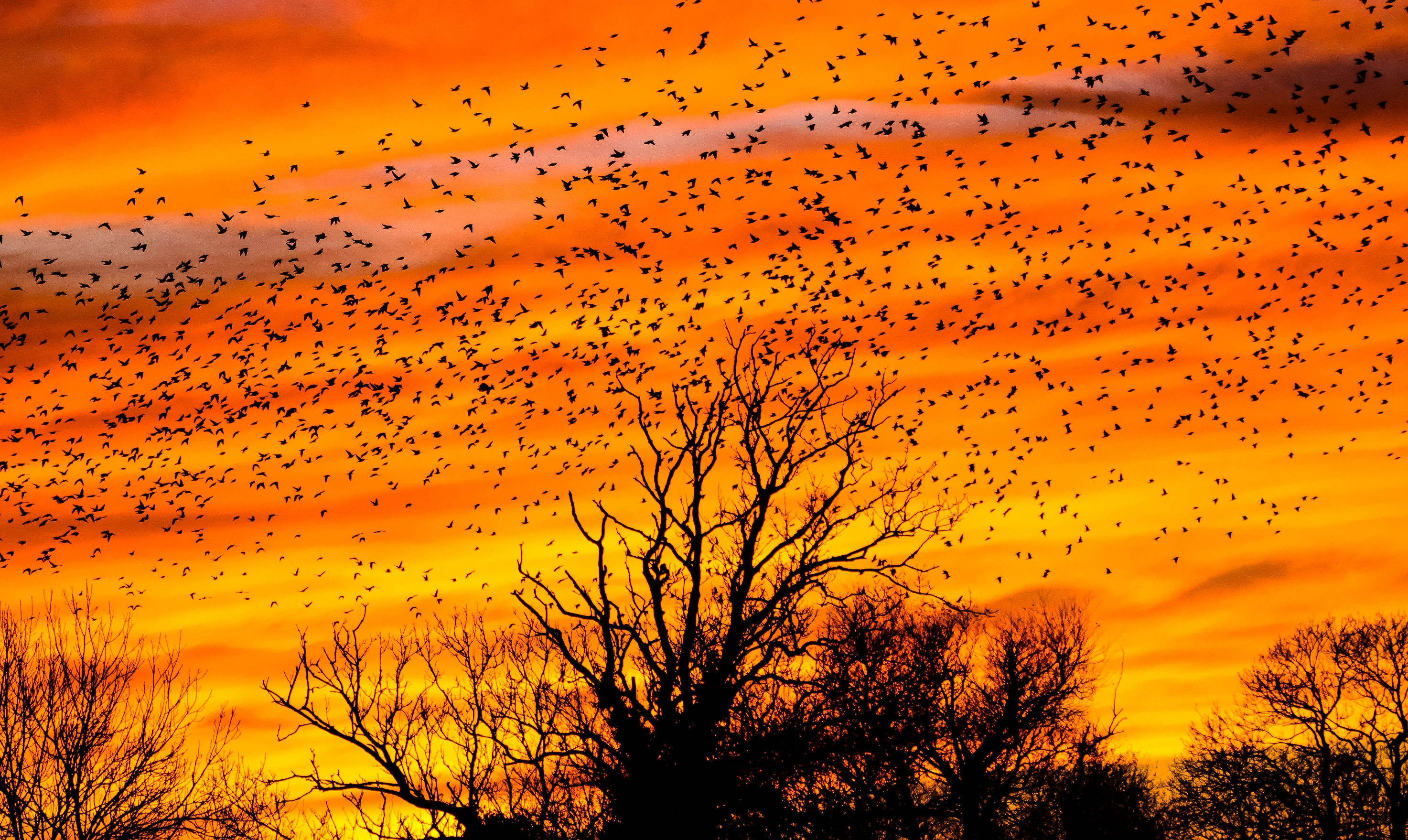 sunset shot Thirteen Ways to Look at Birds smaller.jpg